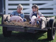 Agricoltura, dalla Regione 3,1 milioni per attività sociali ed educative