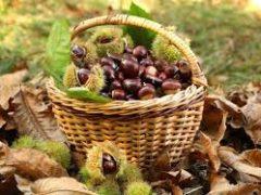 Bando A.4.1.1 – Valorizzazione castagneti da frutto