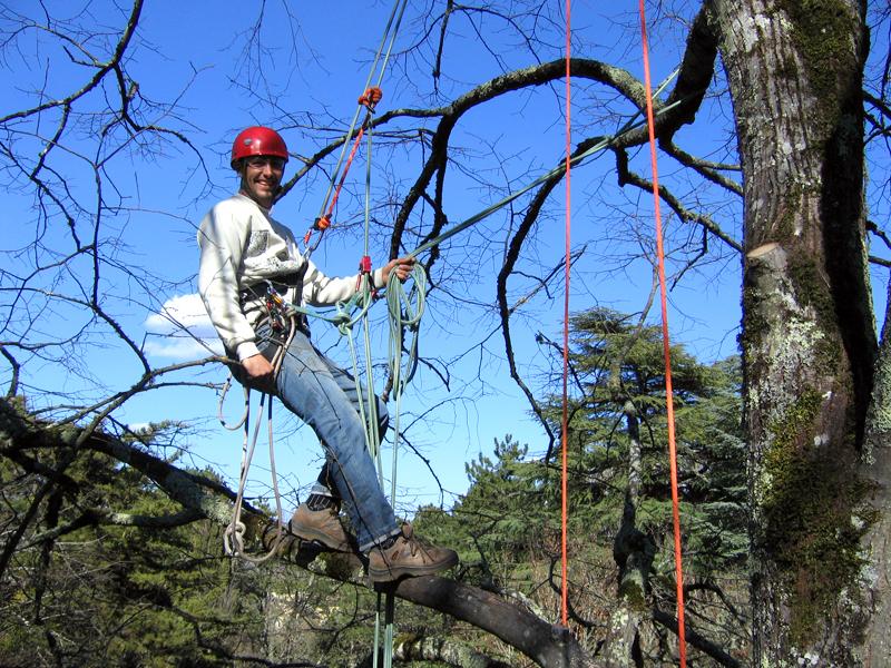 CORSO TREE CLIMBING