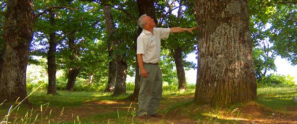Progetto pilota per la difesa fitosanitaria eco-sostenibile del castagno nell'appennino modenese e reggiano