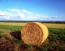 BANDO GAL A1.1 Investimenti in imprese agricole 2019